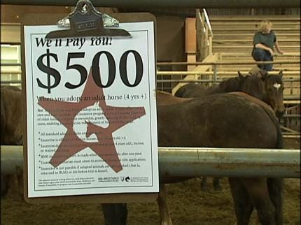 Wild Horses Find New Owners In Kellyville