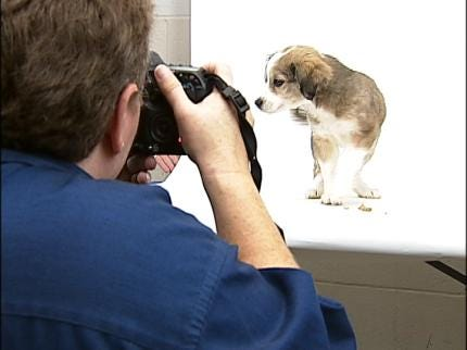 Bartlesville Shelter Using Professional Photography To Help Spur Adoptions