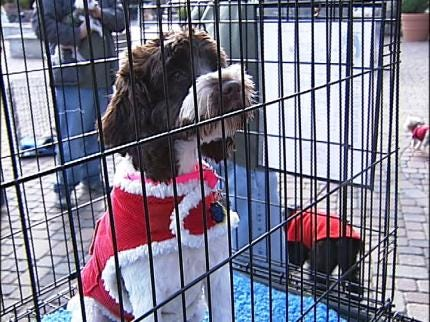 Tulsa Area Pets And Their People Celebrate All Things Dog