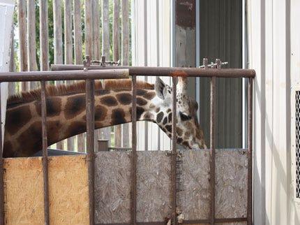 California Girl Arrives At Tulsa Zoo