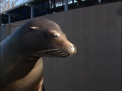 Tulsa Zoo's Sea Lions Moving To Oklahoma City