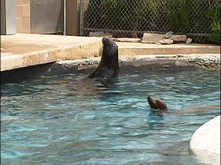 Tulsa Zoo's Sea Lions Move To Oklahoma City