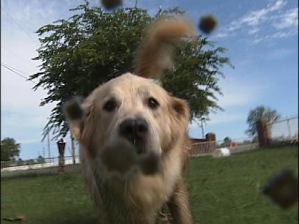 Does Your Dog Need A Canine Flu Vaccine?