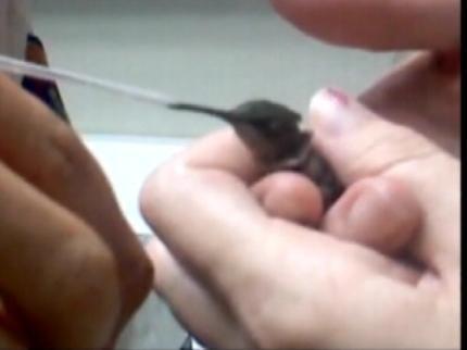 Oologah-Talala Paramedics Save Hummingbird