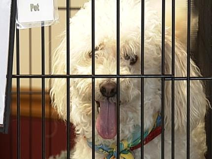 Grand Reopening Held For Humane Society Of Owasso