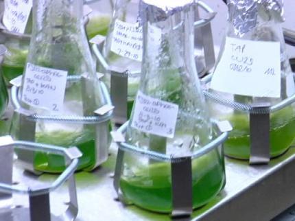 University Of Tulsa Students Hoping To Turn Algae Into Alternative Fuel
