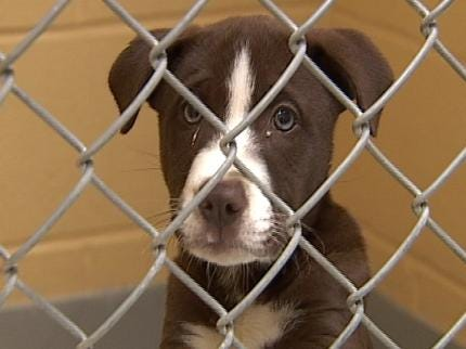 Tulsa Animal Shelter Provides Legal Alternative To Dumping Pets