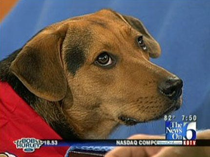 Radar The Weather Dog Promotes Pet Rescue At 'Woofstock'