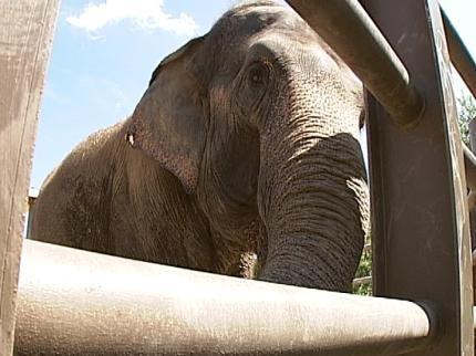 Tulsa Zoo 'Elebration' Set For Labor Day Weekend
