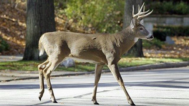 Deer Hunters Having A Good Year Across Oklahoma