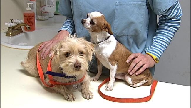 Oklahoma Puppy Mill Owners Dodging New Regulations