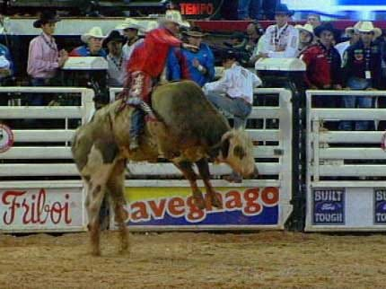 What Does It Take To Be A Successful Bull Rider?