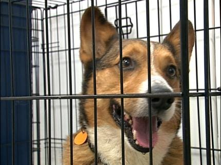 Tulsa Humane Society Finds Homes For Dozens Of Dogs & Cats