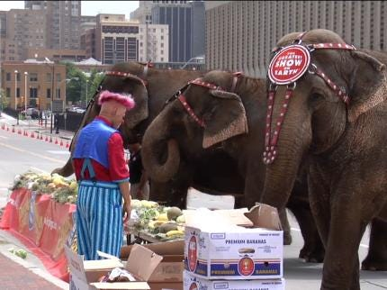 'Ringling' Elephants Get Relief From Green Country Heat
