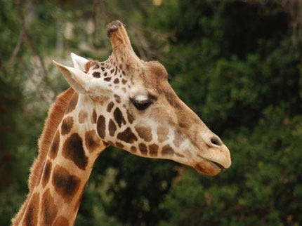 Tulsa Zoo Staff Defends Actions, Again