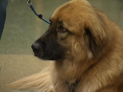 Tulsa Courtroom Dogs Have Friends And Foes