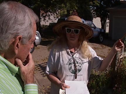 Monarch Butterflies Fill Tulsa Woman's Backyard