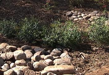 Volunteers Create Broken Arrow Rain Garden
