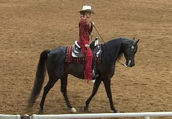 Arabian Championship Horse Show Rides Into Tulsa