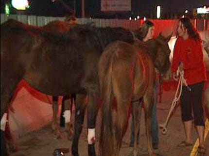 Loaded Horse Trailer Overturns On Interstate 44 In Tulsa