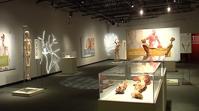 Bodies the Exhibition Shows You What's Inside You