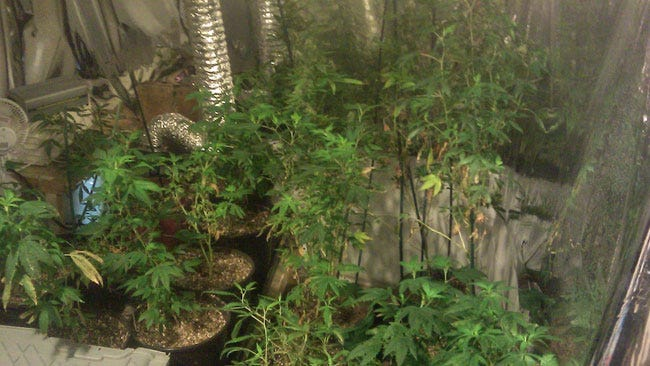 Sex Offender Search Leads To Pot Bust In Rogers County