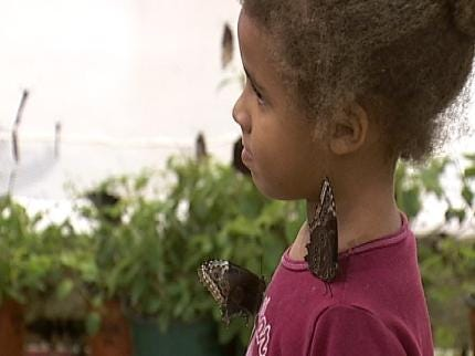 Butterfly House A Thrill For Tulsa State Fairgoers