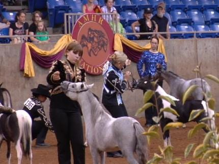 Miniature Horses Compete For National Championship In Tulsa
