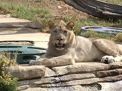 Special Activities Planned This Weekend For Tulsa Zoo Animals