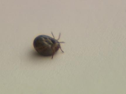 Sand Springs Apartment Complex Dealing With Tick Infestation