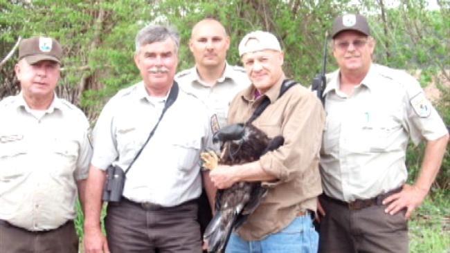 Oklahoma Bald Eagle Fledgling Tracked In Monitoring Program