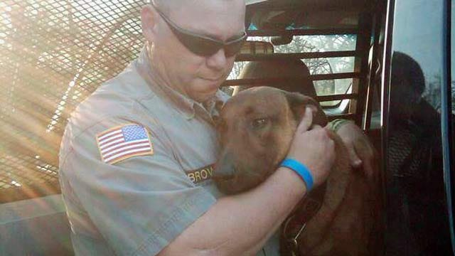 Cancer Takes The Life Of Delaware County Police Dog