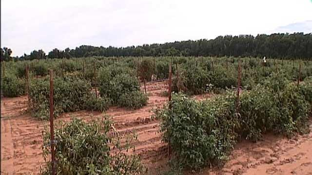 Rain, Cooler Temperatures Bring Relief For Oklahoma Farmers