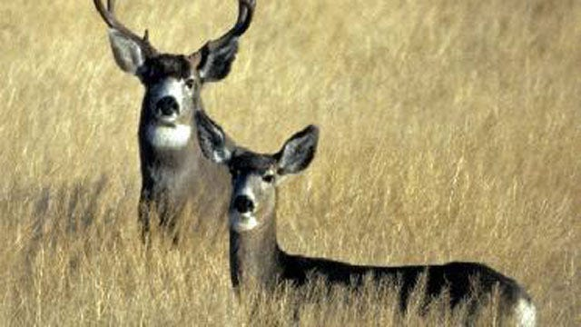 Two Deer Killed With Arrows On Mayes County Farm