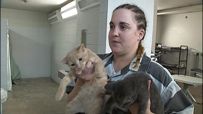 Jailhouse Cat Program Benefits Wagoner County Inmates
