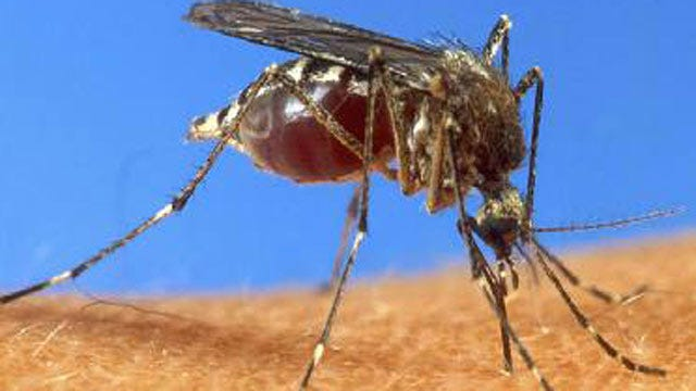 West Nile Virus Infected Mosquitoes Found In Tulsa