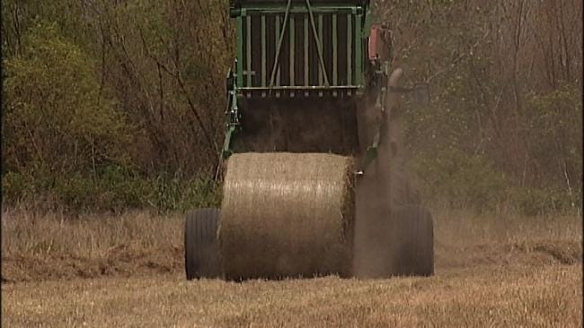 Price Of Hay In Oklahoma Rising Like The Heat