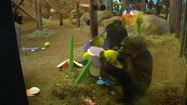 Chimpanzee At Tulsa Zoo Celebrates Fourth Birthday