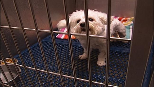 Oklahoma Lawmakers Debate Puppy Mill Legislation