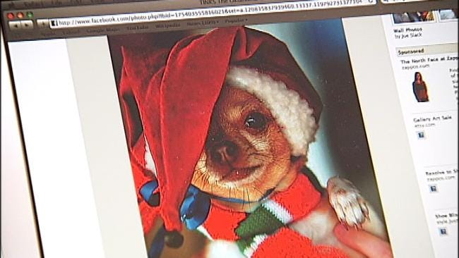 Tinks The Oklahoma Chihuahua Gains Followers On Facebook