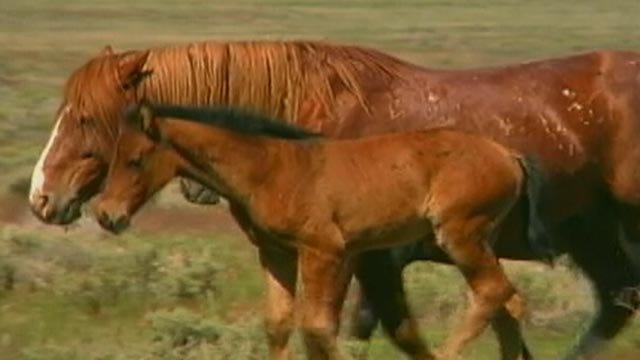 Oklahoma Spending Millions Of Taxpayer Dollars To House Wild Horses