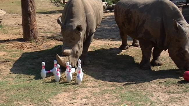 Tulsa Zoo: 'Bowling For Rhinos' Raises Money For Conservation Efforts