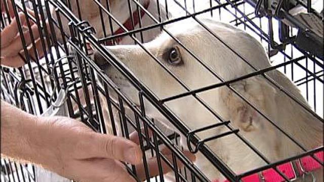 Pet Rescue Groups Showcased At Tulsa Promenade Mall
