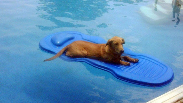 NewsOn6.com Viewers Share Pics Of Their COOL Pets
