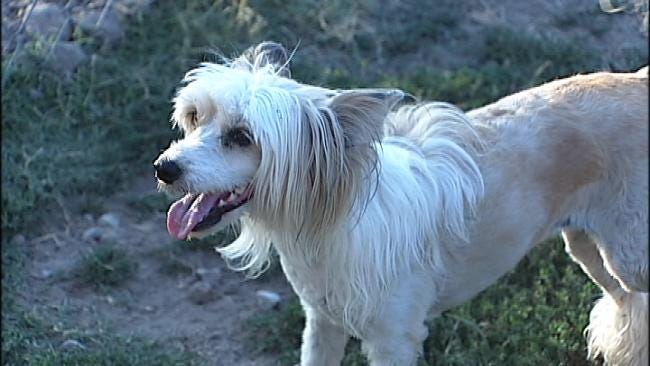 Proposed Tulsa Animal Ordinance Change Leads To Dogfight