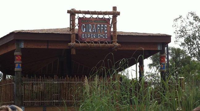 'Giraffe Experience' Opening Draws Crowds At Tulsa Zoo