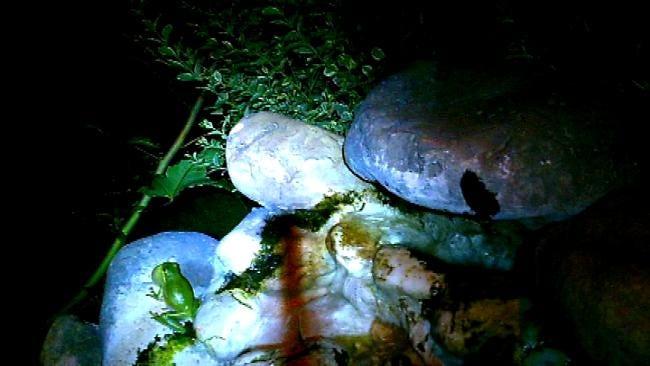 Barking Frog Creates Buzz In Owasso Neighborhood