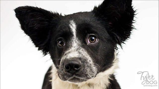 Bartlesville Pet Rescue Group Breaks PetSmart Charities Record
