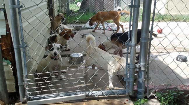Pets Rescued In Latimer County Raid Ready For Adoption