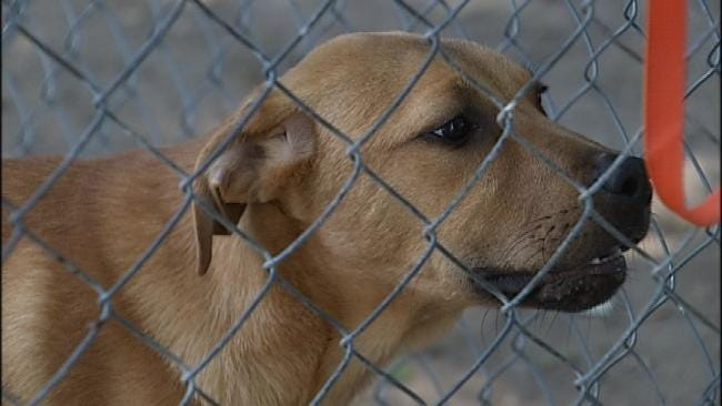 Adopt-A-Thon Continues Sunday For Dogs Rescued In Latimer County Raid